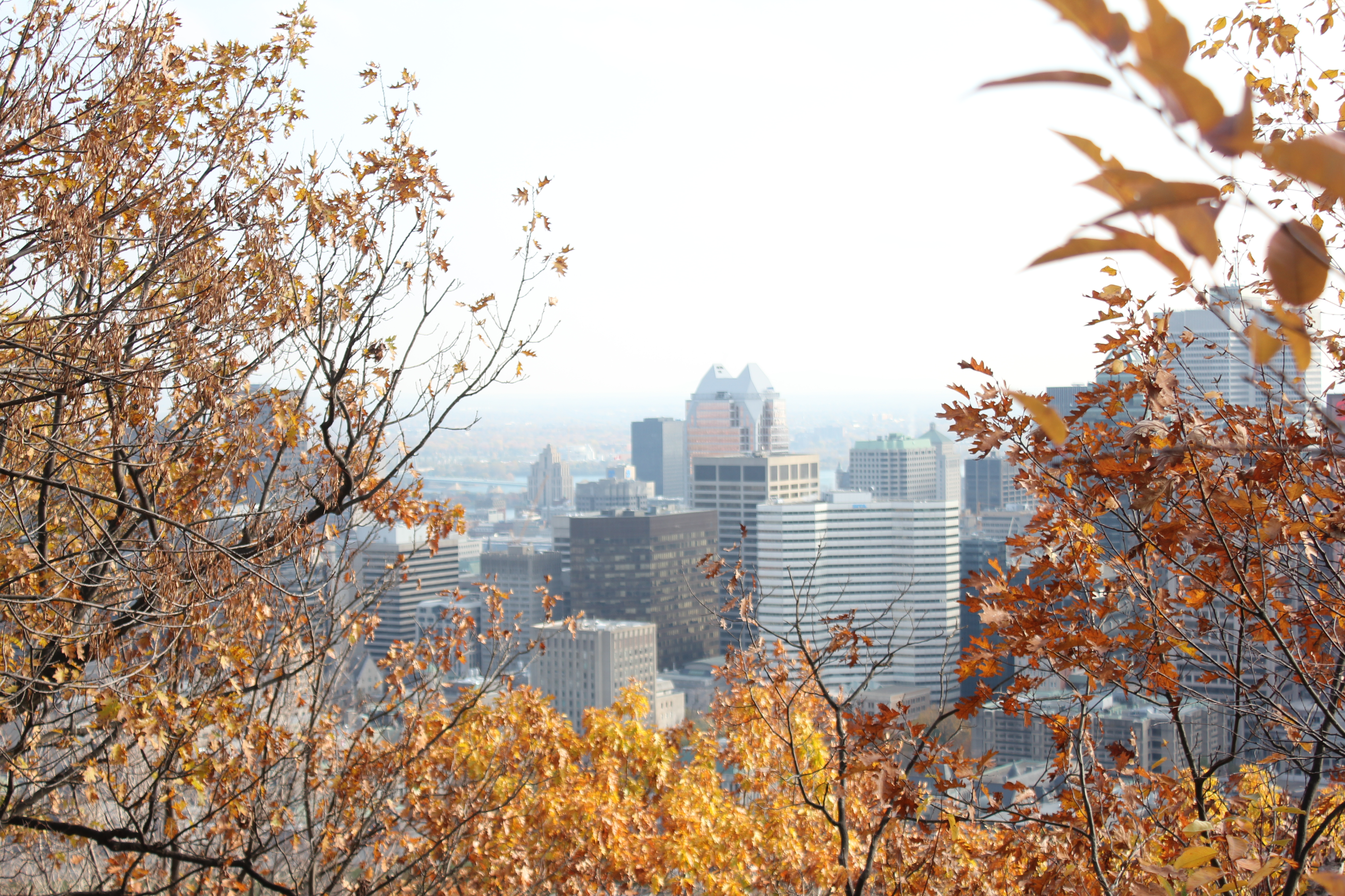 how to get to the top of mont royal